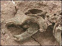 Китай: динозавров съели млекопитающие