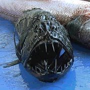 Подводная экспедиция обнаружила морских монстров