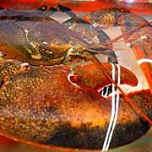 Омар-долгожитель стал сенсацией на рынке морепродуктов