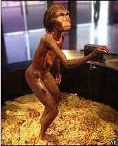 Скелет древнейшего из ныне известных двуногих существ обнаружен в Эфиопии