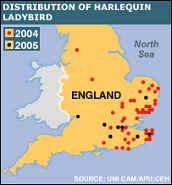 Арлекин-иностранец терроризирует природу Англии