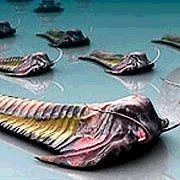 Трилобиты вымерли из-за того, что их съели