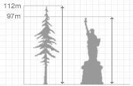 Деревьям положен предел