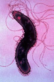 Оледенелое озеро прячет бактерий