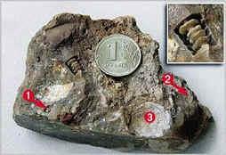 Пружинке 330 миллионов лет