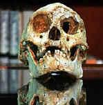 Австралийские и индонезийские археологи чуть не подрались из-за черепа хоббита