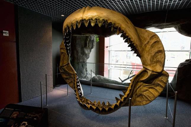 Челюсти мегалодона — гигантской рыбы, вымершей 1,5 миллиона лет назад