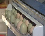 В Полесском районе курица стала нести зеленые яйца